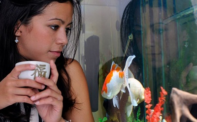 How Home Aquariums Can Improve Your Health