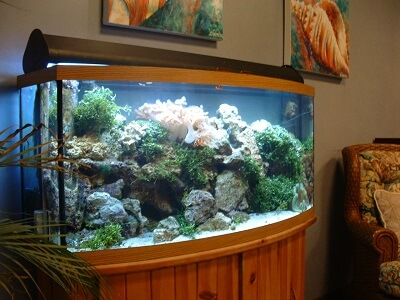 How to Setup a Home Aquarium