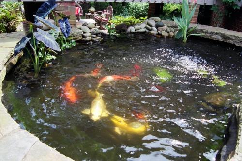 The first steps to building your own garden pond easy for Simple koi pond