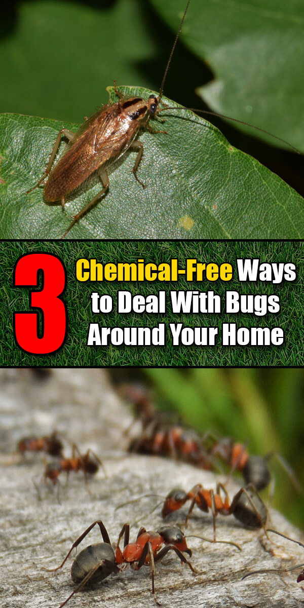 3 Chemical-Free Ways to Deal With Bugs Around Your Home - Easy Home Concepts
