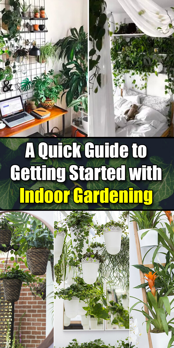 A Quick Guide to Getting Started with Indoor Gardening - Easy Home Concepts